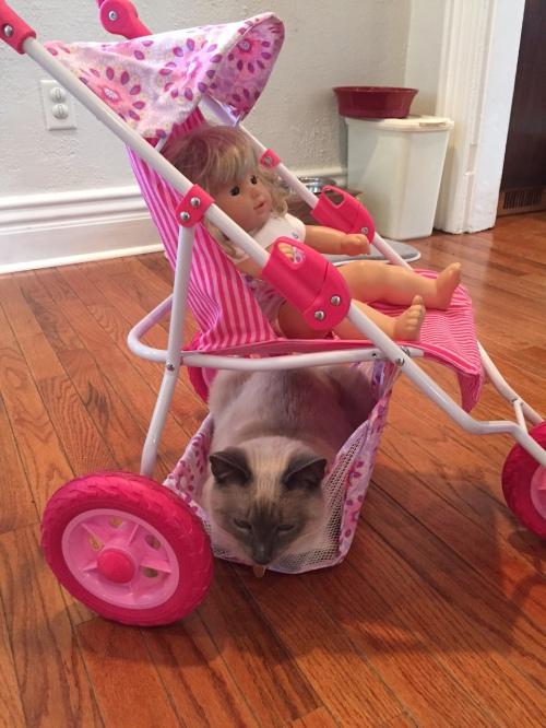 LJ cat in stroller